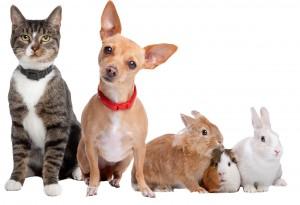5 pets cutout