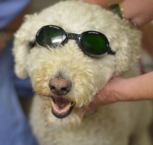 Cozy laser doggles_edited-1