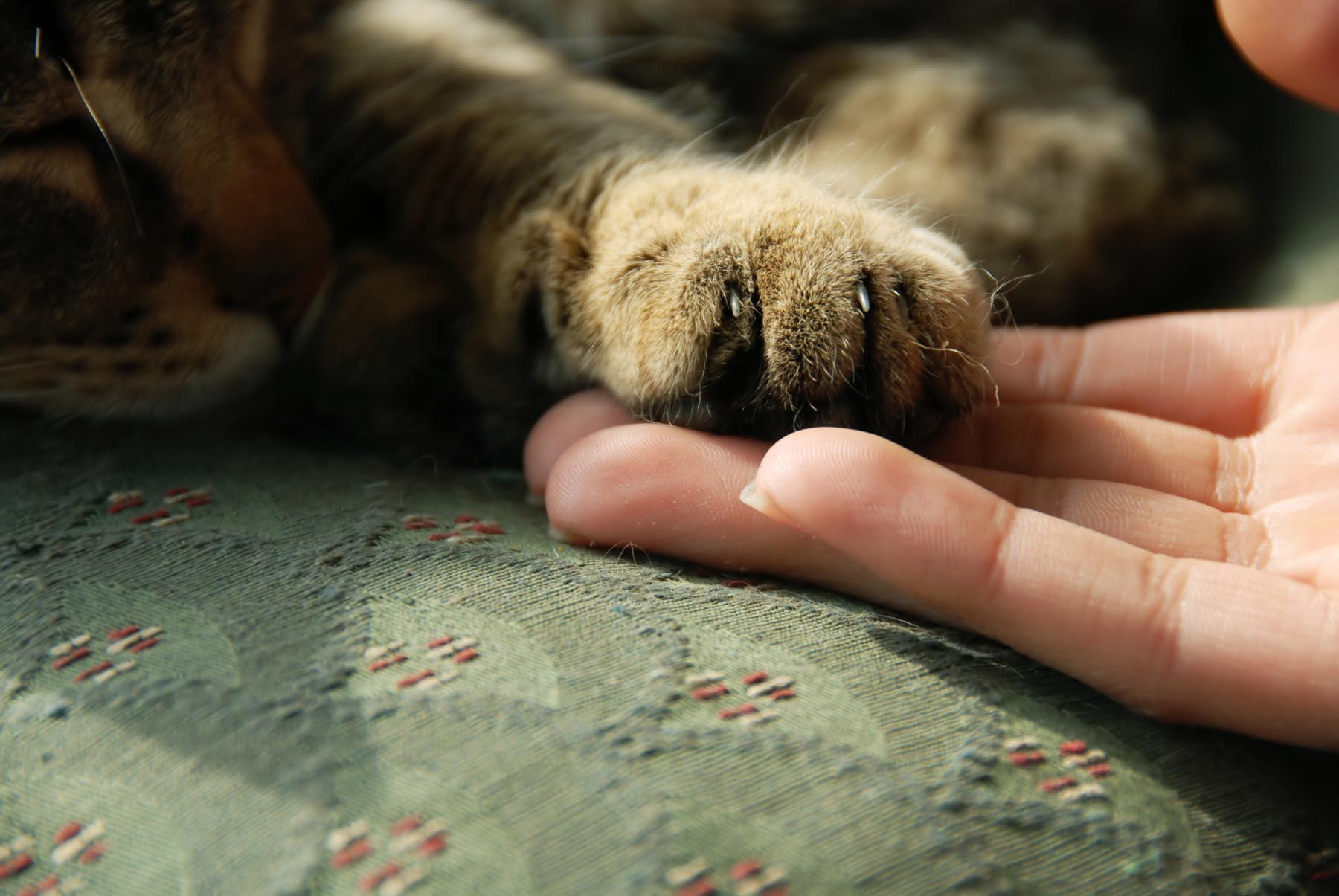 How to Trim Your Cat s Claws