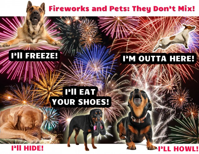 Fireworks and Pets Do Not Mix Well!