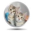 Kitten Adoptions
