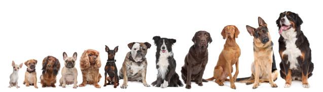 Canine Influenza Update 4/27/15